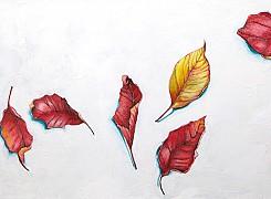 Fall remnant (leaf)